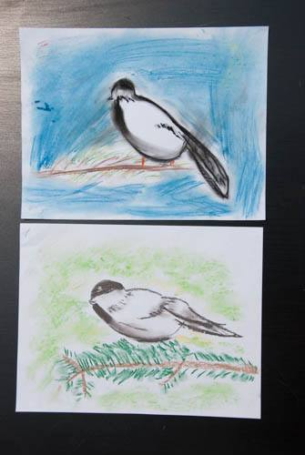Black Capped Chickadee, chalk pastel with Hodgepodge tutorial, combining art with nature study!