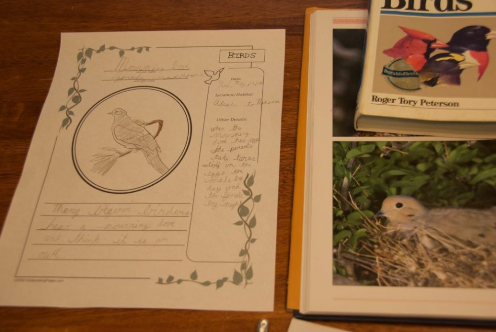 Nature Study Notebooking Pages