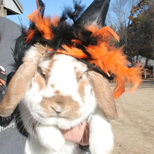 Angus the bunny