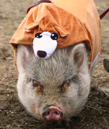 round Hog Day 2/1/2020