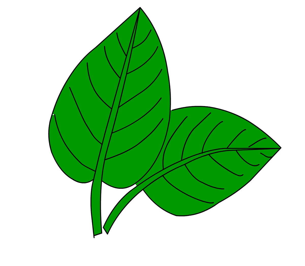 Images Of Leaf For Kids Green Learning Printable