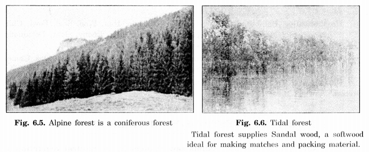 NCERT Solutions for Class 7 Social Science Geography Chapter 6 Natural Vegetation and Wild Life 3