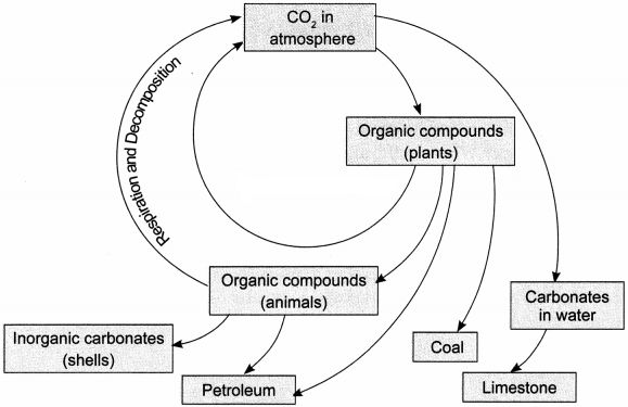 Natural Resources Class 9 Extra Questions and Answers Science Chapter 14 img 4