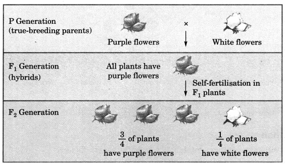 Heredity and Evolution Class 10 Notes Science Chapter 9 2
