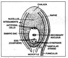 Class 12 Biology Important Questions Chapter 2 Sexual