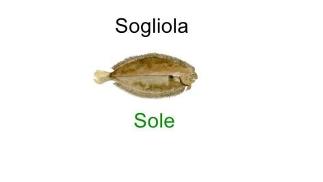 Sole in italian