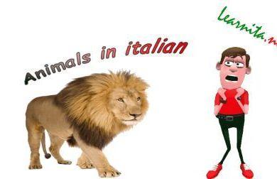 Animals in italian