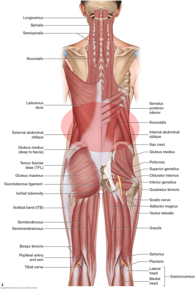 What are the causes of low back muscle spasming?