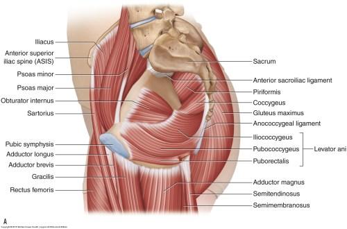 small resolution of diagram lower pelvis