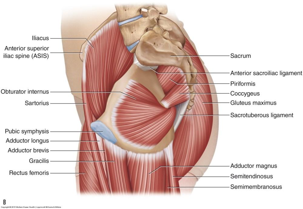 medium resolution of diagram lower pelvis wiring diagram schema diagram lower pelvis