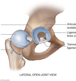 figure 47 ligaments of the hip joint a anterior view b posterior view c lateral open joint view aiis anterior inferior iliac spine  [ 1366 x 983 Pixel ]