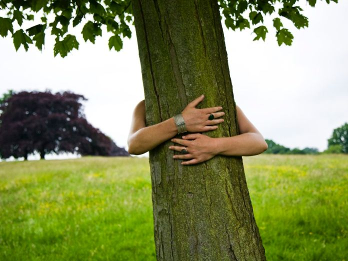How to Hug a Tree in 10 Easy Steps