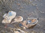 prehistoric trail shoes