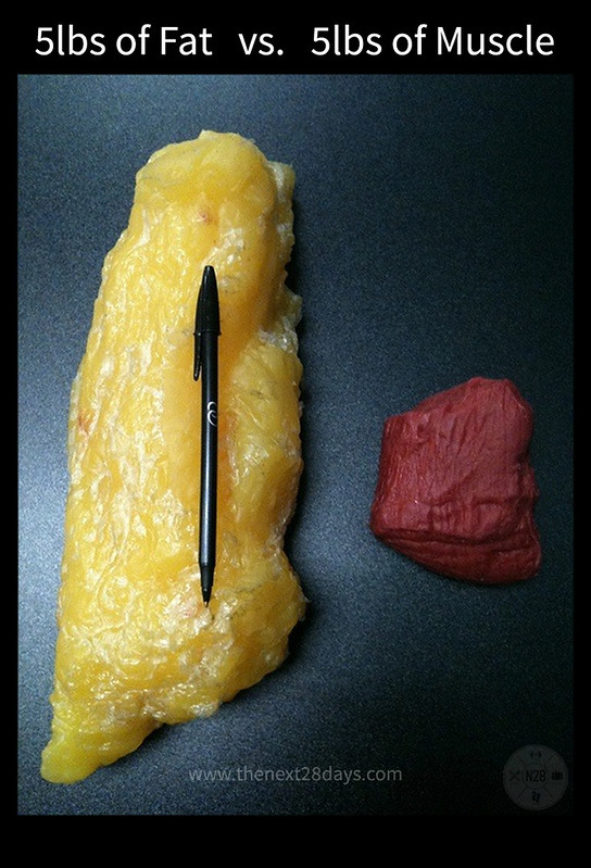 5 Pounds of Fat