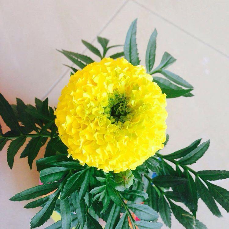 Good Morning Yellow Rose Flower Images Wajiflower Co