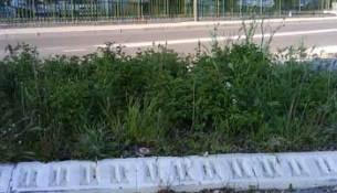 herbes_hautes1