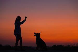 Beruf Hundetrainer