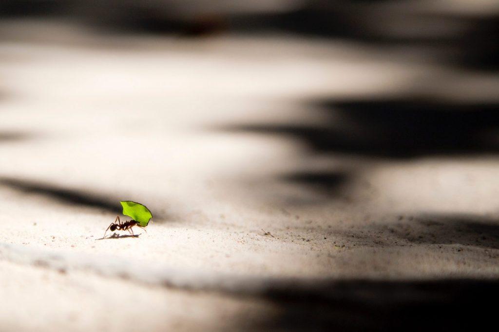 Ameisen für gutes Karma