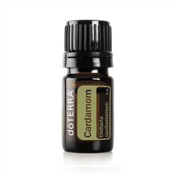 Kardamon Elettaria cardamomum - Cardamon