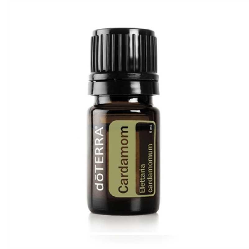 Kardamon  Elettaria cardamomum – Cardamon