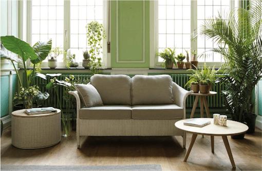 plante-verte-et-mur-vert-clair- bicolore-vincent-sheppard