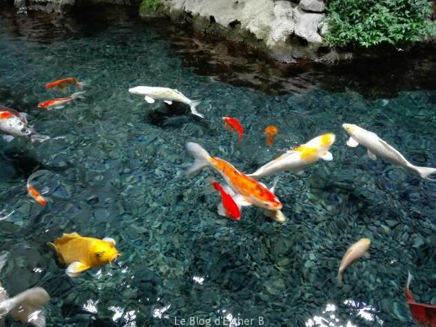 aquarium_paris_bassin_caresses