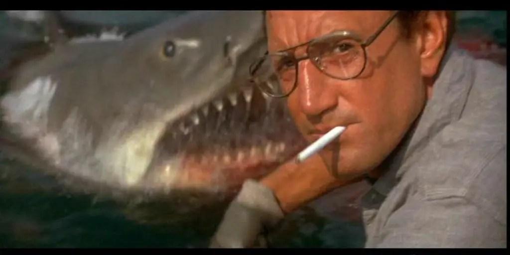 Shark VS Brody