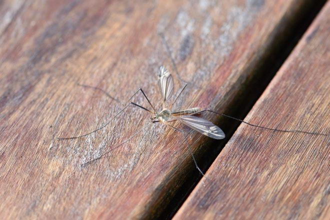 des astuces naturelles pour se d barrasser des moustiques chez soi. Black Bedroom Furniture Sets. Home Design Ideas