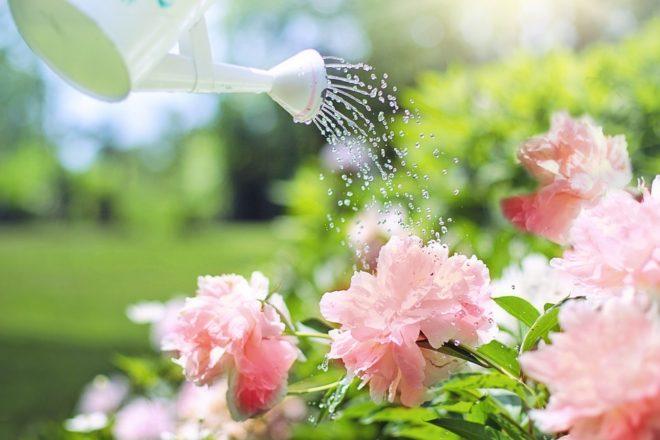 plantations de fleurs