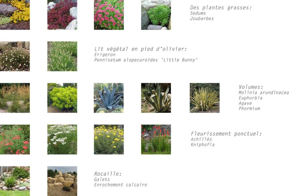 05-esquisse-présentation-jardin-aménager
