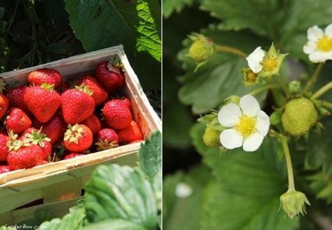 wpid-Erdbeeren_1-2013-07-15-07-00.jpg