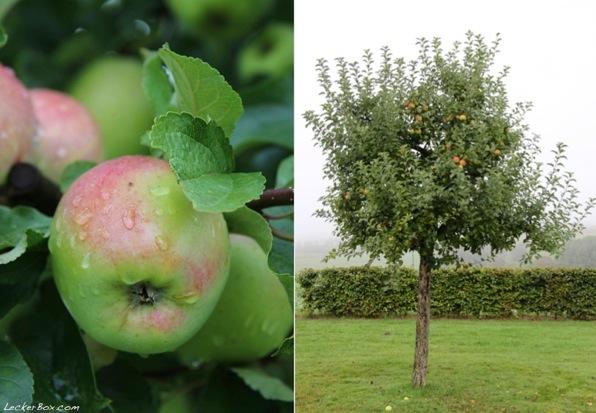 wpid-Apfel-Kuerbis-Muffins_3-2013-10-13-15-351.jpg