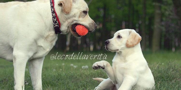 empatia-tra-cani