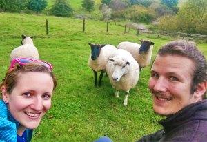 Mouton_animaux
