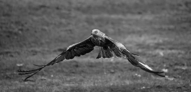 faucon-decollant