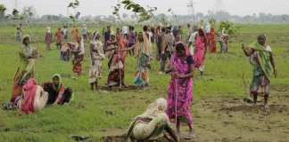 implantation des arbes en Inde