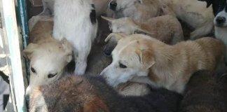chien-transfert-