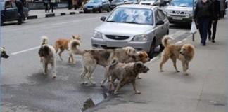 chiens errants