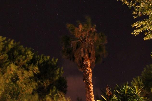 HDR Nachtaufnahme Palme in Imperia