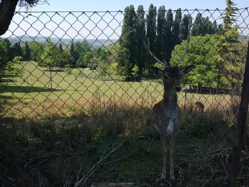 zoo Parco Sigurtà