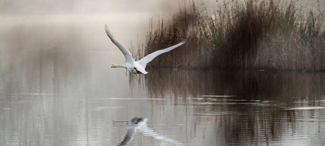 Torbiere del Sebino: un passeggiata nella riserva naturale