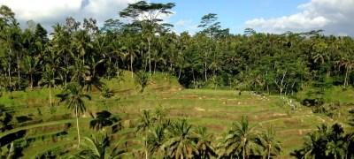 Bali Indonesia in 13 giorni: cosa vedere e come organizzare il viaggio