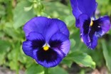 heller-garden-fiori (4)