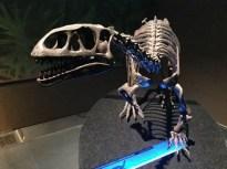 dinosauri-giganti-dall-argentina-mudec-11