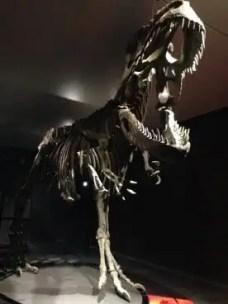 dinosauri-giganti-dall-argentina-mudec-3