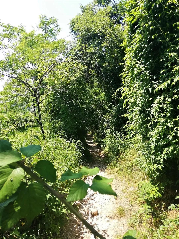 Sentiero Valle dei Mulini a Garda