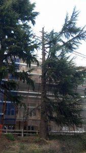 albero-via-verdi