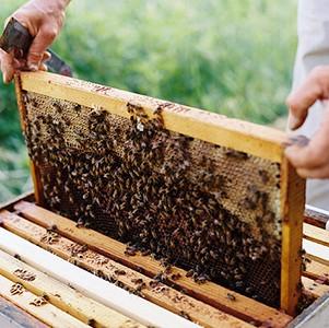 apicultura februarie