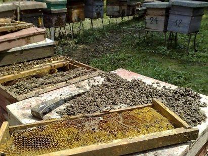de ce mor albinele
