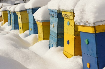 intretinerea familiilor de albine pe timp de iarna